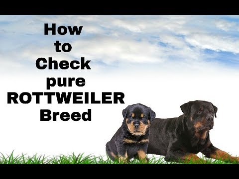 How to check Rottweiler pure breed| Telugu by Taju logics