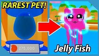 I got the Jelly Fish Pet! *RAREST PET* Roblox Bubble Gum Simulator