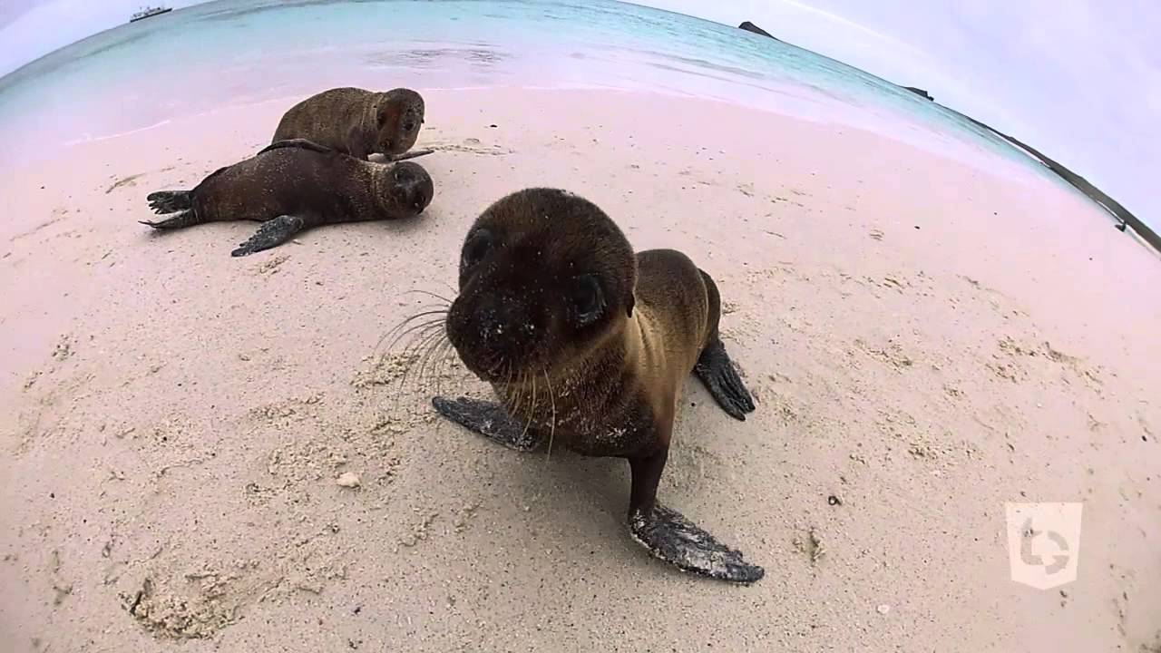 Sea Lion Puppies Youtube