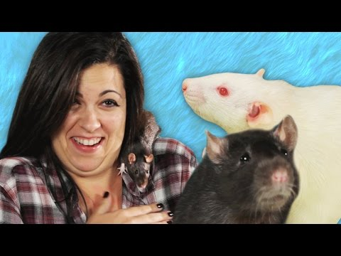 People Play With Rats For The First Time