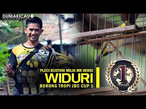 Dunia Kicau - Pleci Buxtoni Widuri Borong Tropi JBC CUP 1