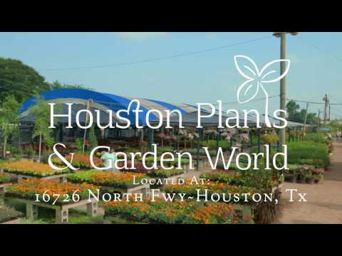 Houston Garden Center 281-830-2089 Zen