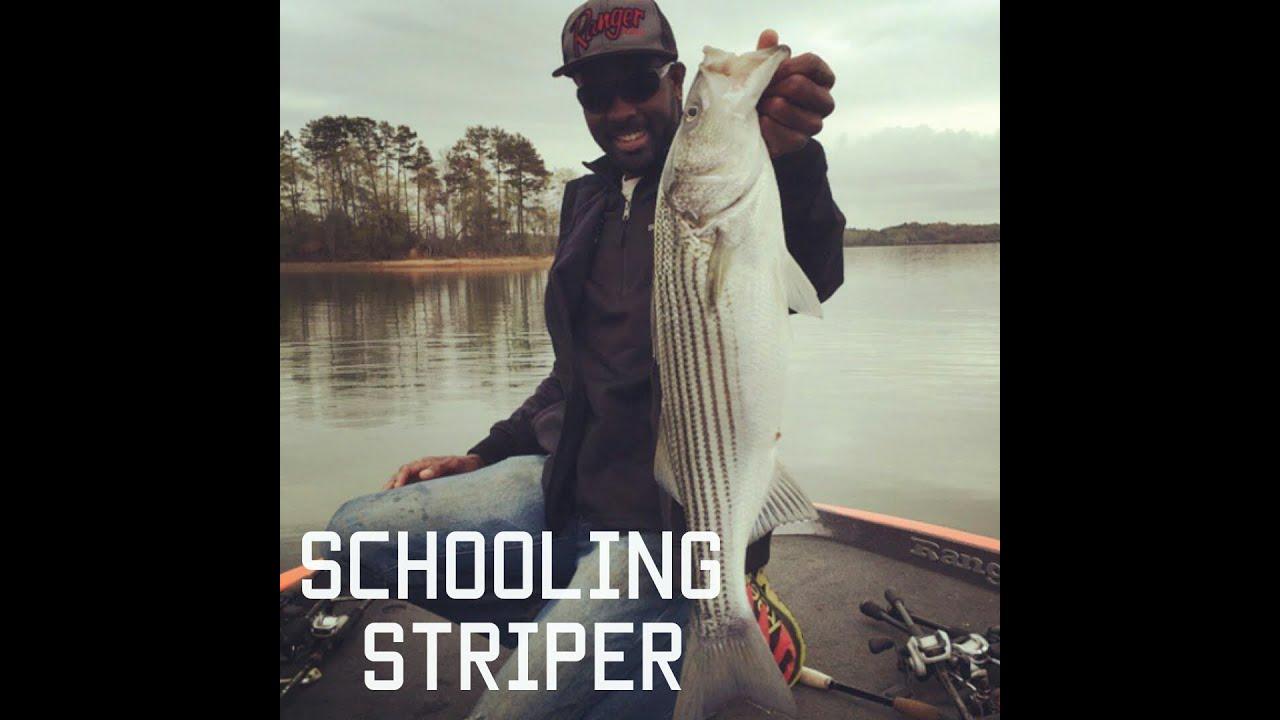 Striper fishing action brian latimer fishing for for Lake hartwell striper fishing report