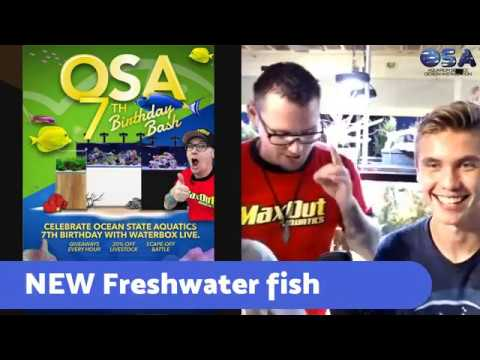 What's NEW this week ! OSA Live !