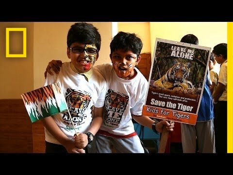 To Save Tigers, India Turns to Kids | National Geographic