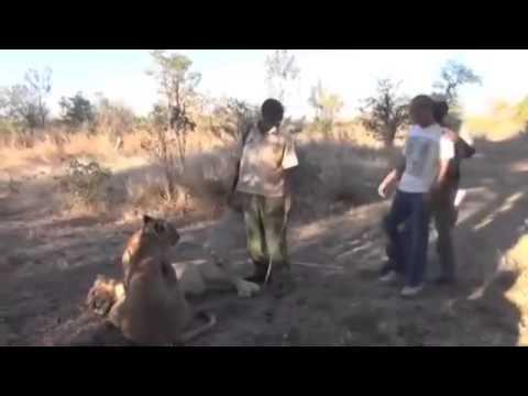 «Походка испуганного кота» смотреть видео онлайн