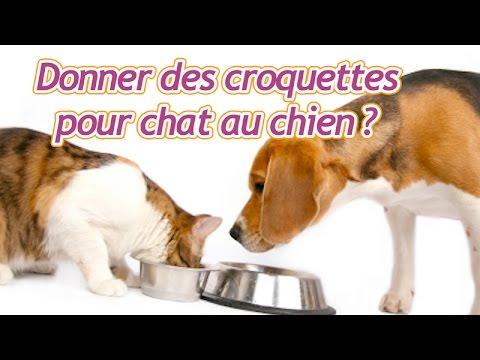 Peut On Donner Des Croquettes Pour Chats à Un Chien ?