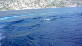 Incontro con i delfini in Croazia. Isola di KRK Gita con l'imbarcazione Angelina Agosto 2009