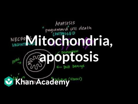 Mitochondria, Apoptosis, and Oxidative Stress