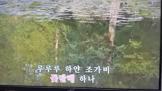 박인희 하얀조가비