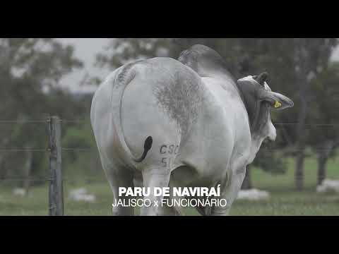 LOTE 06 - PARU DE NAVIRAÍ
