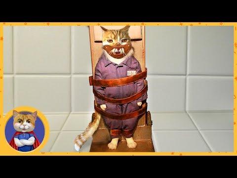 Рыжик ОЗВЕРЕЛ и покусал ветеринаров! Смирительная рубашка и намордник для котов Фильм Молчание котят
