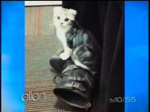 Ellen Pompeo talking about Taylor Swift's cat