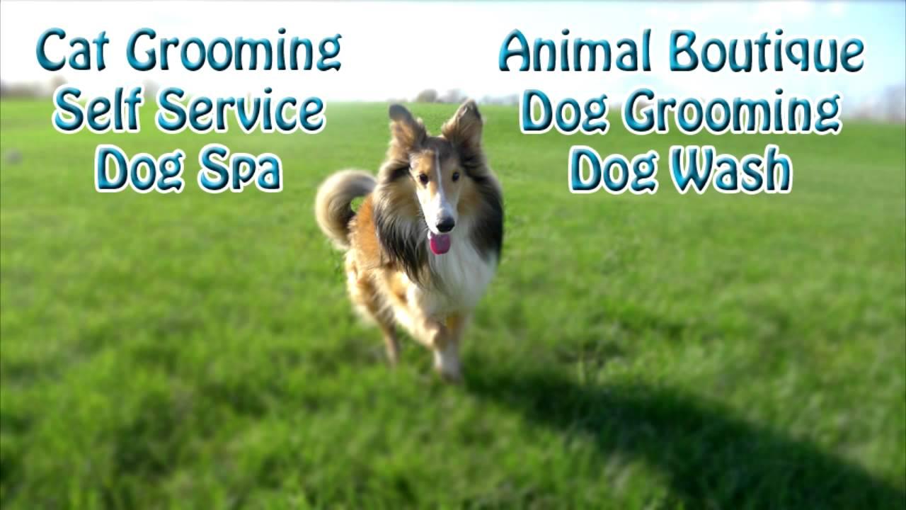 Spawlash pet grooming llc youtube spawlash pet grooming llc solutioingenieria Gallery
