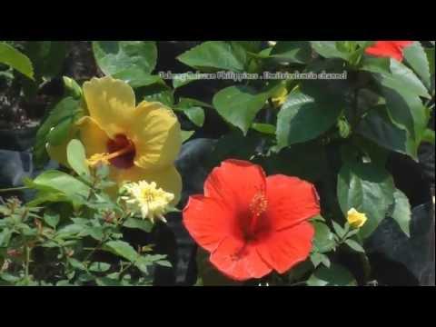 Philippines - Garden Trip at Tabang Bulacan
