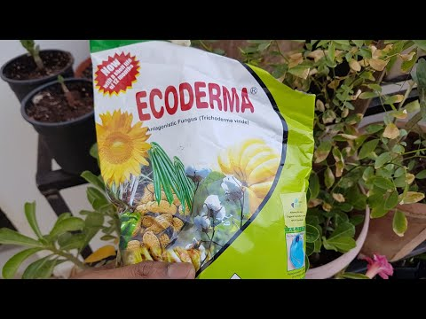 which is best organic FUNGISIDE to save ADENIUM & another gardening plants from root rot( Hindi )