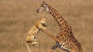 Эти Редкие Битвы Животных Побили Все Рекорды! Топ 10