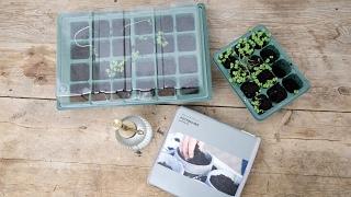 DIY – Plant in little greenhouses by Søstrene Grene
