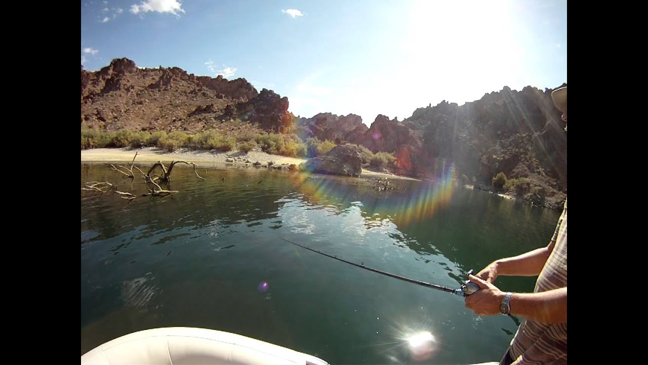October fishing on lake mojave no fish in the lake for Lake mohave fishing report