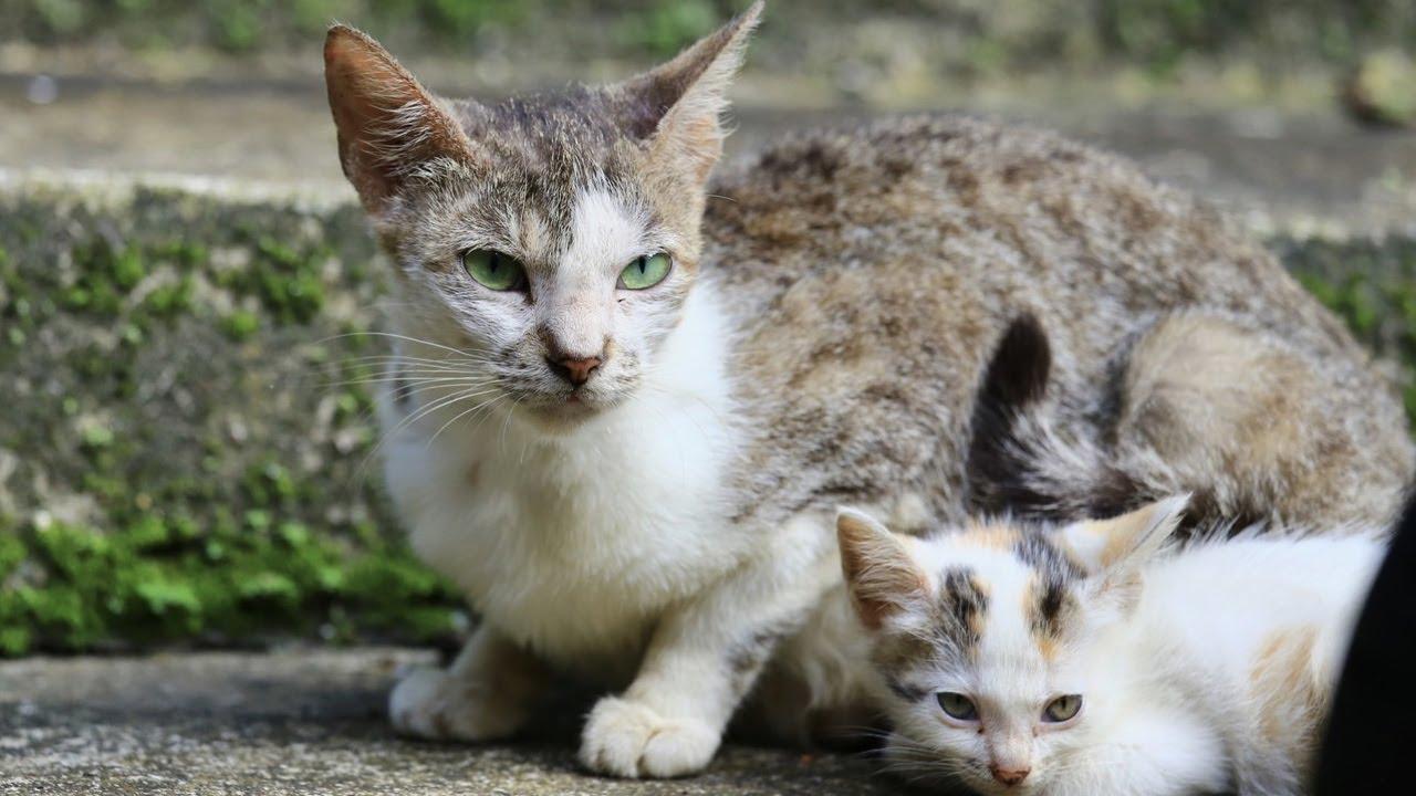 拍貓。流浪的貓咪 2 每張照片都有貓咪自己的故事 Cat Photography - YouTube