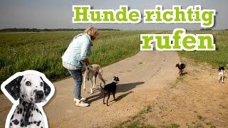 Rückruf Kommando Training - Dein Hund hört nicht und kommt nicht zurück? So rufst du ihn richtig.