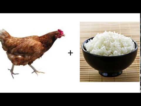 Chicken And Rice Song
