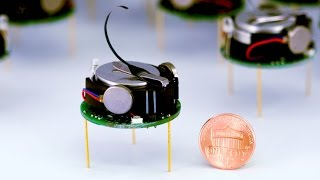 These Tiny Robots Are Shaping the Future... All By Themselves!