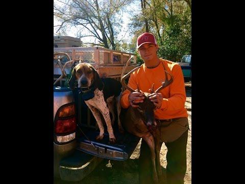 SC Deer Dog Drives 2016! We Visit With The Blackville Hunt Club!