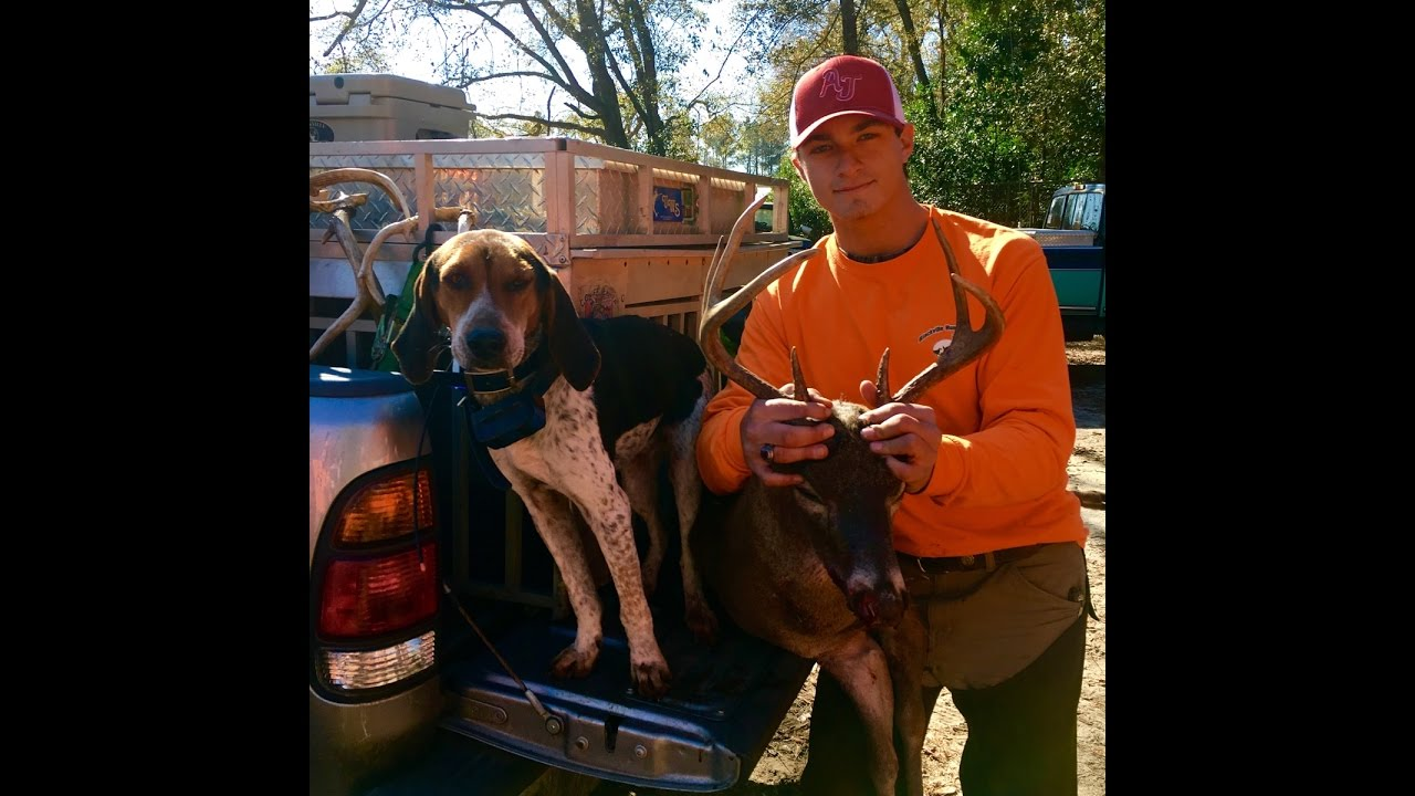 SC Deer Dog Drives 2016! We visit with the Blackville Hunt Club!