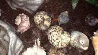 Hermit Crab Tank Tour! :D