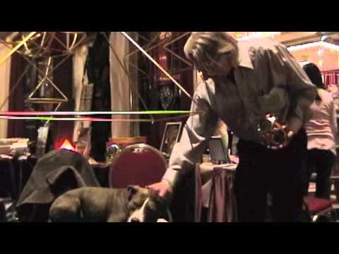 The Pyramid Man Nick Edwards Star of Conscious Life Expo 2012