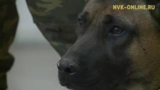 Почему собаки-клоны оказались не приспособлены для службы в Якутии?
