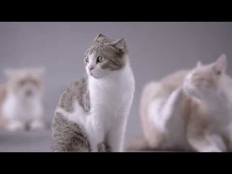 Kotex's Cat video ad by Ogilvy & Mather Advertising Shanghai