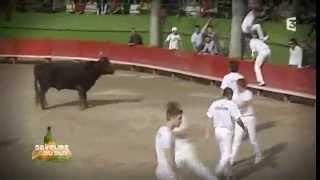 Jean Louis Plo et sa manade de taureaux camargue au mas de Pontevès