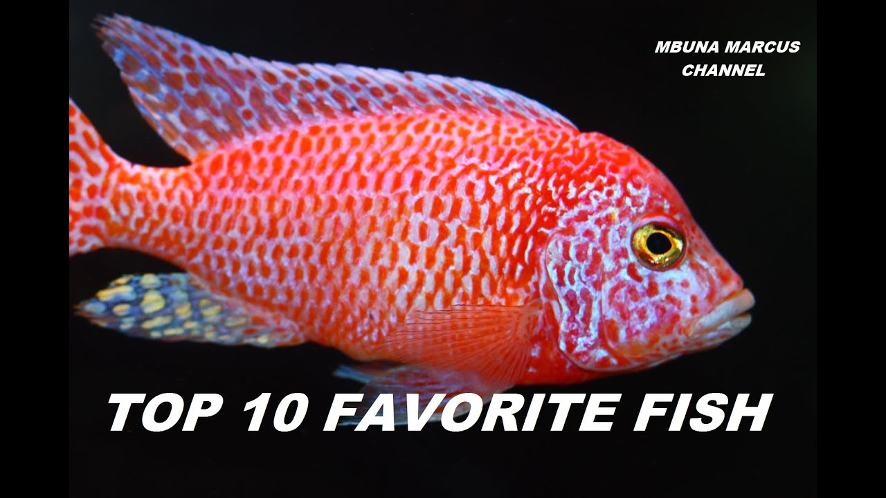 TOP 10 FRESHWATER AQUARIUM FISH - YouTube