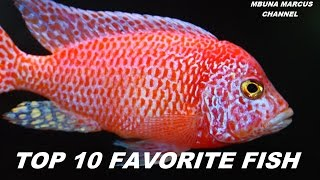 TOP 10 FRESHWATER AQUARIUM FISH