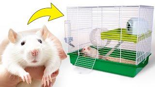 DIY Rumah Baru untuk Tikus yang Lucu