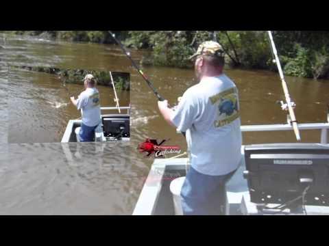 Altamaha River Flathead Catfish - Blue Catfish