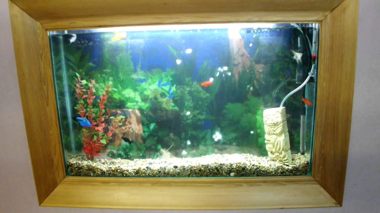 Acuario de cuadro vivo youtube for Cuadros con peces