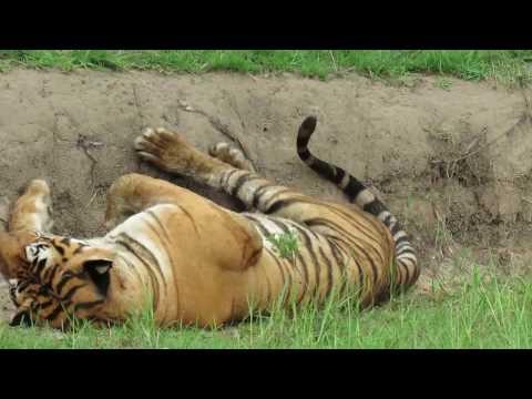 bandhipur tiger reserve
