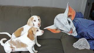 Dogs vs. Giant Mouse Prank: Funny Dogs Maymo & Penny