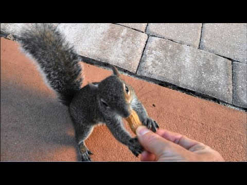 How To Touch a Squirrel
