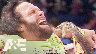 "WWE Biography: Randy ""Macho Man"" Savage Bitten by Jake The Snake's Cobra 