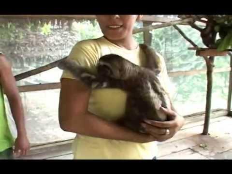 Oso Peresoso | KTV Entertainment - Iquitos