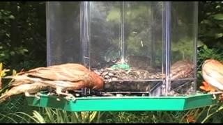 Bird Feeder Hopper Style