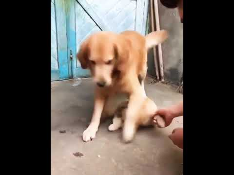 Sad mother dog protects her pup from human harm