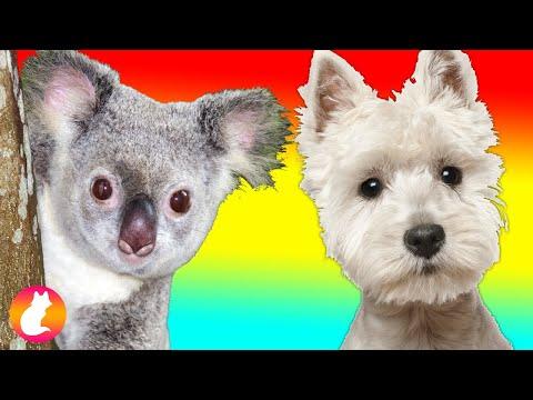 Funny Animal videos | Cute Pet video compilation | Animal Videos #42