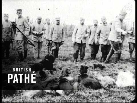 Real Dogs Of War - French Army Dogs (1914-1918)