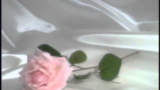 Свадебные футажи РОЗА НА АТЛАСЕ 24 HD скачать бесплатно ссылка в хорошем качестве без регистрации