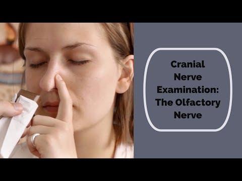Cranial Nerve Examination: CN 1 Olfactory nerve